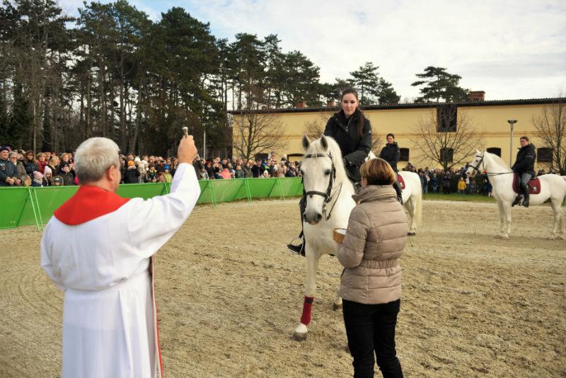 Blagoslov konj v Lipici 2