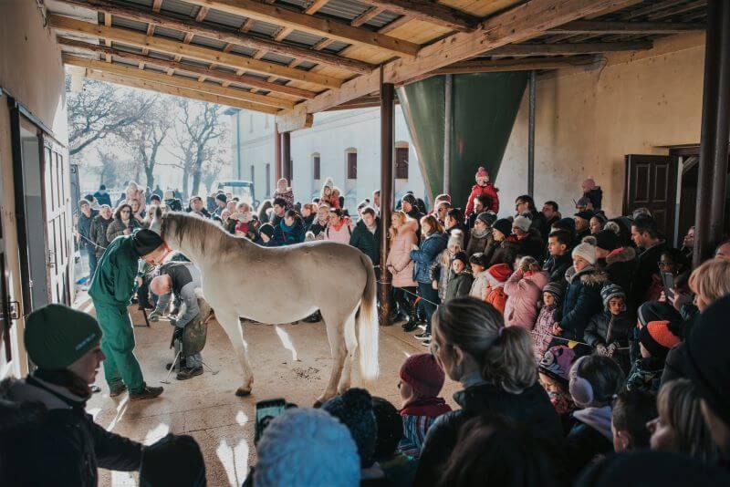 Veseli konjeniški december v Lipici