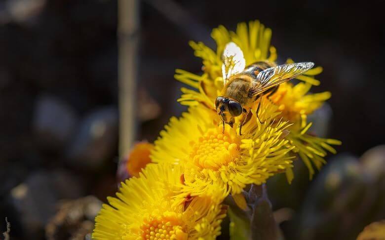 Evropski parlament za zaščito čebel in drugih opraševalcev