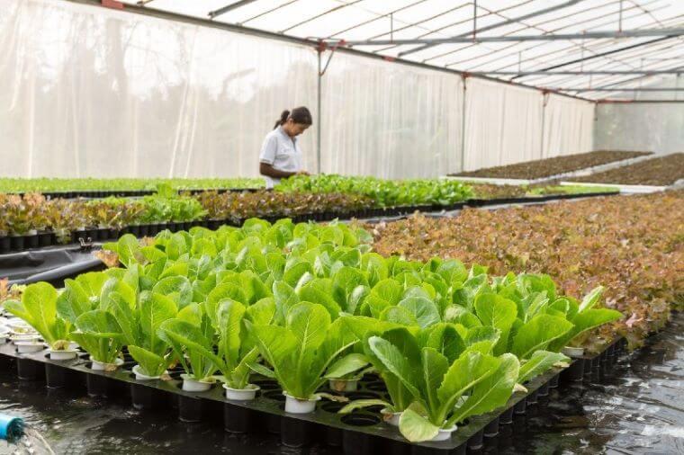 EU bo morala več narediti za pridelovalce hrane