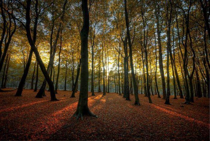 Posadili so 11 milijona sadik gozdnih dreves