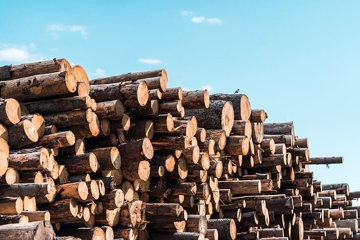 Državna podpora za 7 projektov s področja gozdarstva in lesarstva