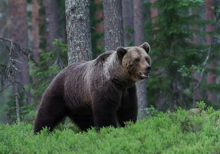 Medvedov je preveč zato jih bodo postrelili 115