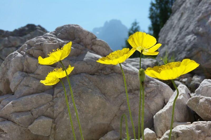 Planinci so največja nevarnost za gorske živali in rastline