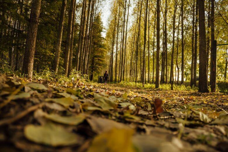Oznanili so kdo je lani najbolje gospodaril z gozdovi