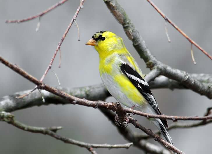 Prva ptičja akcija Inšpektorata za okolje in prostor
