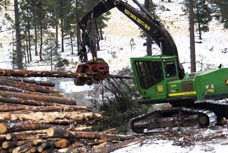 Slovenski projekt o obnovi gozda je med finalisti