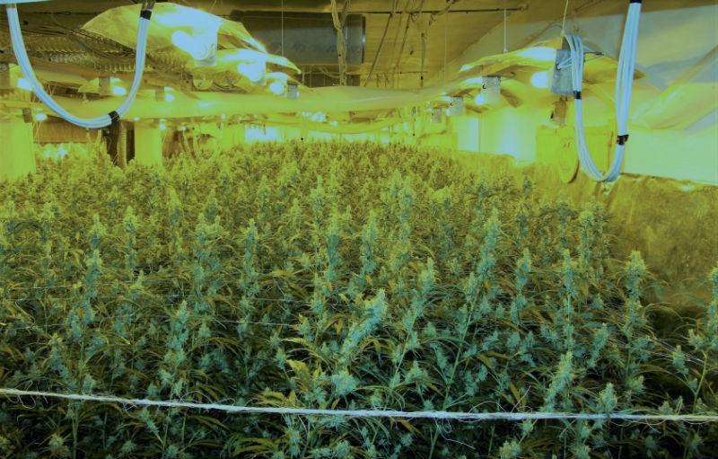Tokrat so zasegli 7 kg kokaina in 500 sadik konoplje