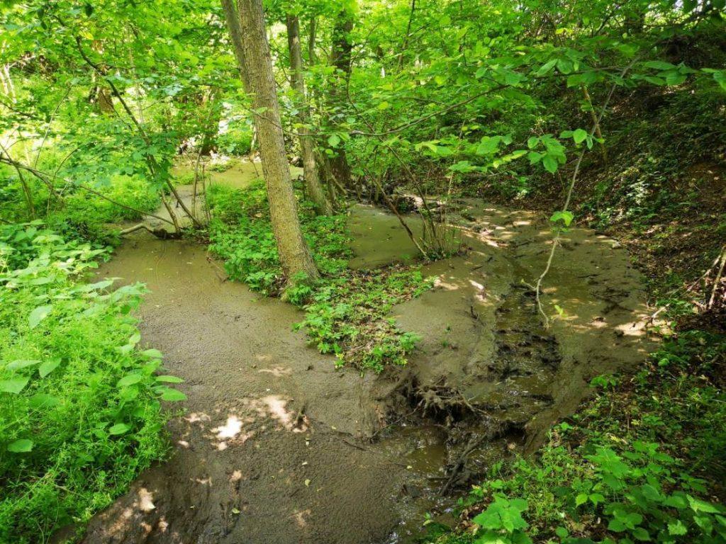 Direkcija poziva občine, naj prijavijo onesnaževalca Pivolskega potoka