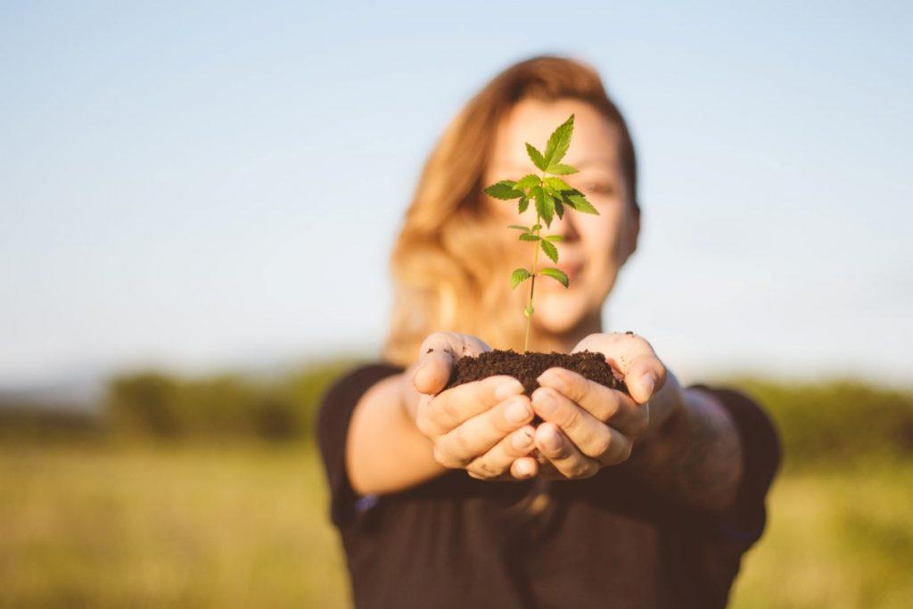 V Svetem Martinu bodo odslej zdravili s kanabinoidi